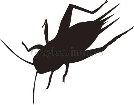 コオロギの画像 p1_19