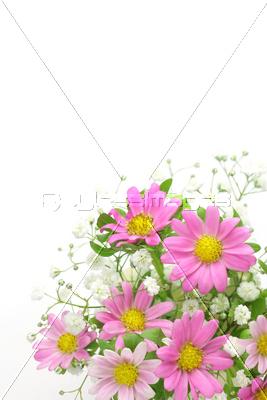 菊とかすみ草の写真イラスト素材 Xf1475063902 ペイレスイメージズ